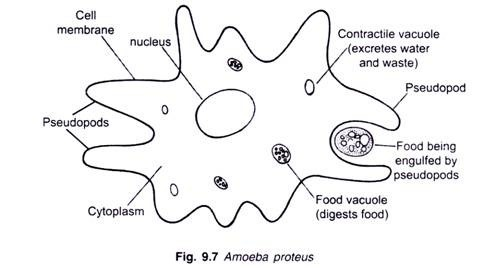 Prokaryote Diagram together with 2724 likewise Intmcidw furthermore Bacteria structure image also Aerobic. on bacteria shape