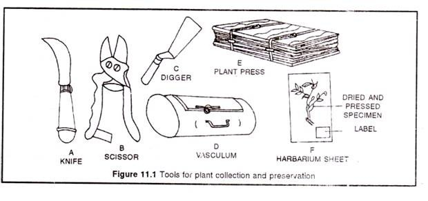 Tools for plant collection and presevation