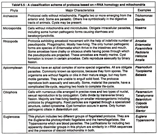 A Classification on scheme of protozoa based on r-RNA homologys and mitiochondria