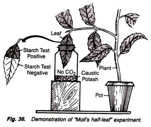 Demonstration of Moll's half-leaf experiment