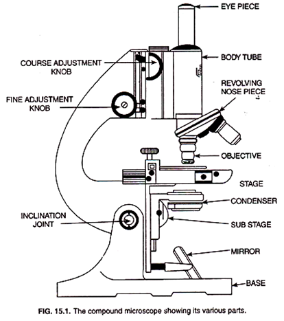 Draw A Compound Microscope And Study Its Parts Science