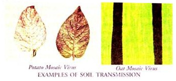 Examples of Soil Transmission